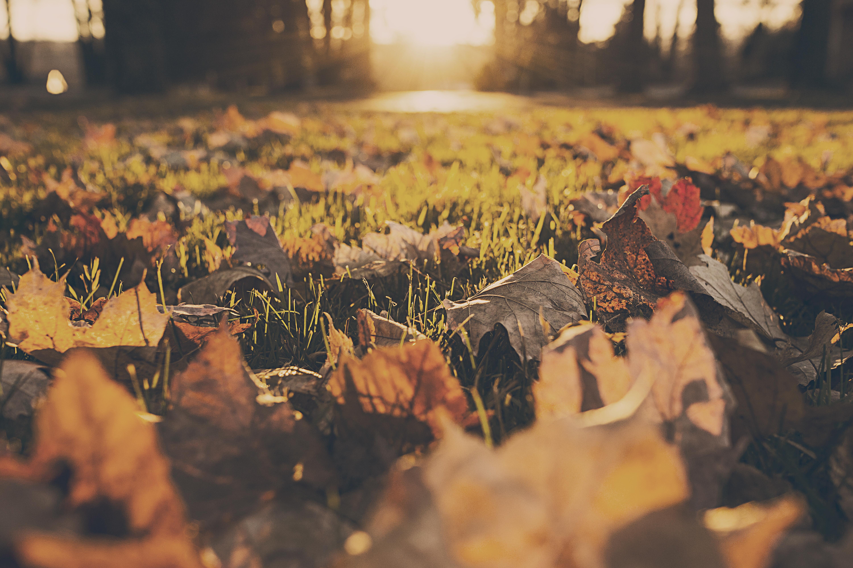 jak polubić jesień
